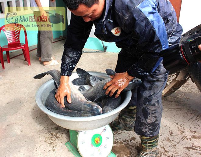 Cá trắm đen được lựa chọn đem kho