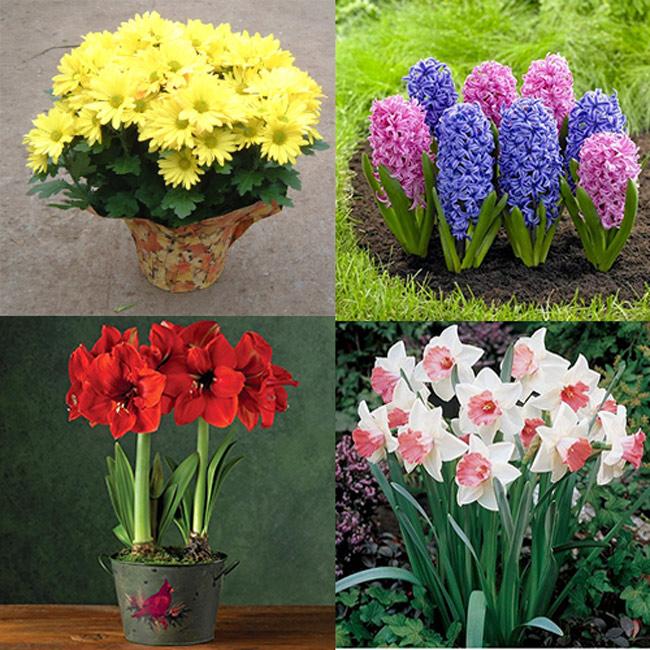 Mỗi loài hoa có một màu sắc, ý nghĩa riêng
