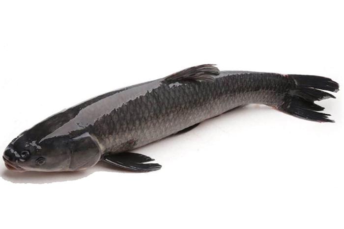 Cá trắm đen với hàm lượng dinh dưỡng cao