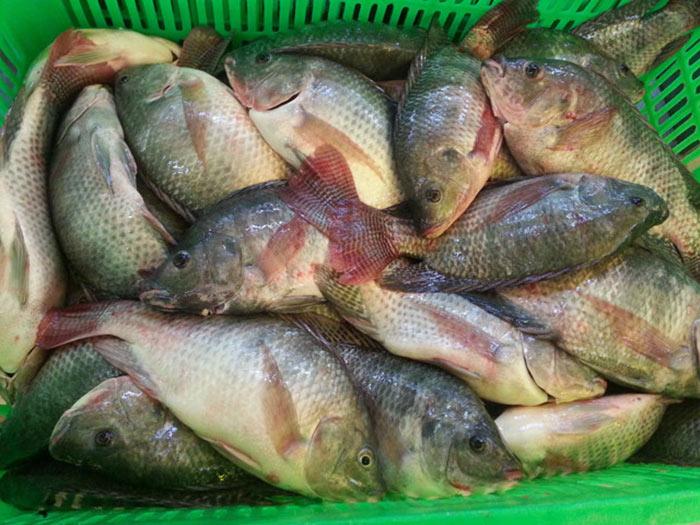 Ưu tiên chọn con cá rô đồng nhỏ để khâu chế biến diễn ra thuận tiện